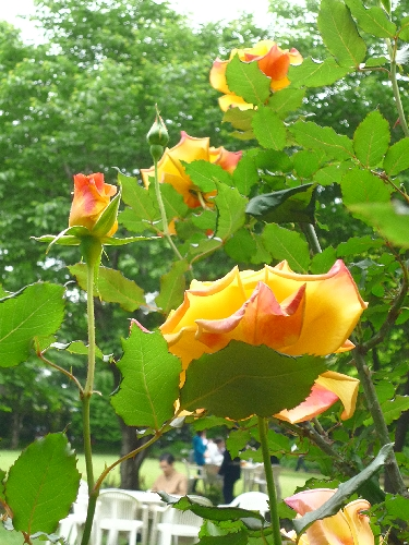 白金 東京都庭園美術館 と Cafe 茶洒 kanetanaka。。。.゚。*・。♡_a0053662_134549.jpg