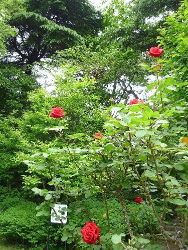 白金 東京都庭園美術館 と Cafe 茶洒 kanetanaka。。。.゚。*・。♡_a0053662_13591727.jpg