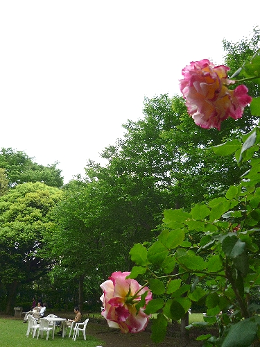 白金 東京都庭園美術館 と Cafe 茶洒 kanetanaka。。。.゚。*・。♡_a0053662_1359321.jpg