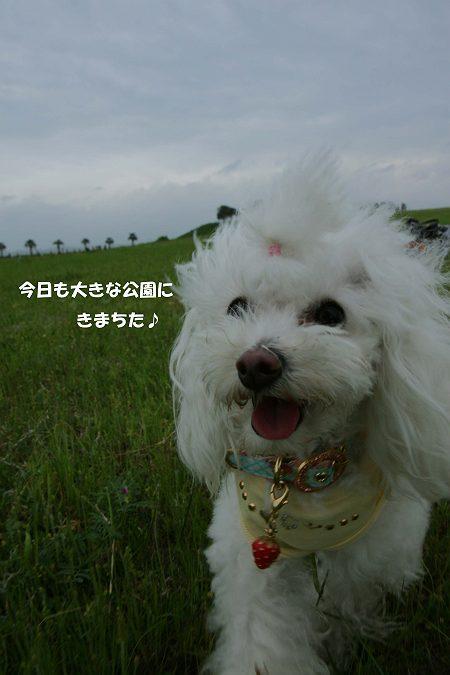 d0048067_0162011.jpg