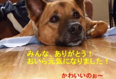 b0087400_0103172.jpg
