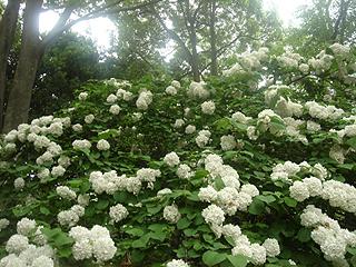 昭和記念公園_c0025217_11183531.jpg