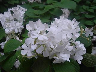 昭和記念公園_c0025217_11184638.jpg