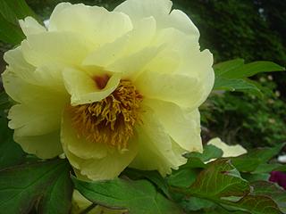 昭和記念公園_c0025217_11191666.jpg