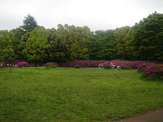 昭和記念公園_c0025217_11194760.jpg