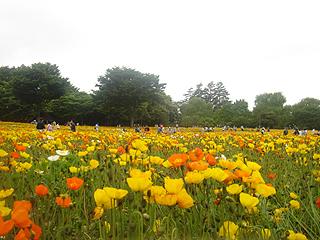 昭和記念公園_c0025217_11195632.jpg