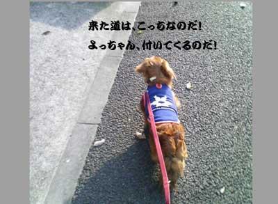 b0059434_035612.jpg