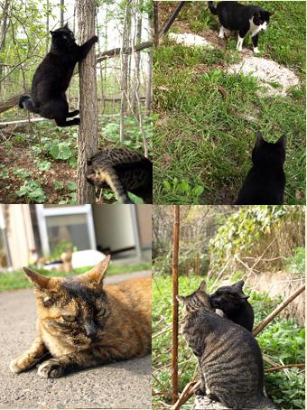 のんびり猫さんたちの連休_a0094336_6461873.jpg