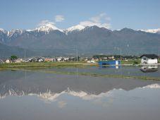 水田に写る北アルプス_c0094442_13595145.jpg
