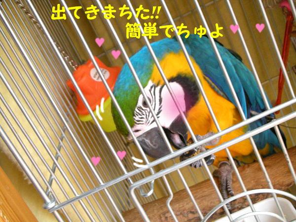 f0132055_858492.jpg