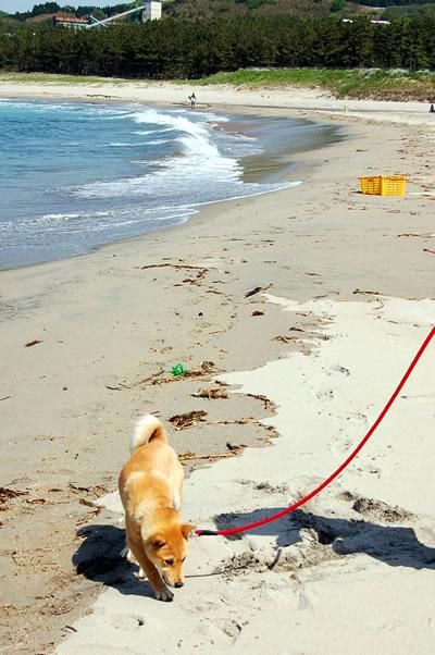 母なる海よ  砂浜よ(前編)_b0123467_1424338.jpg