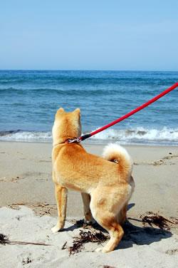 母なる海よ  砂浜よ(前編)_b0123467_1425023.jpg