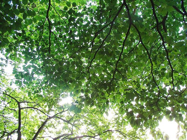 やっぱり森はいい_d0105967_18105531.jpg