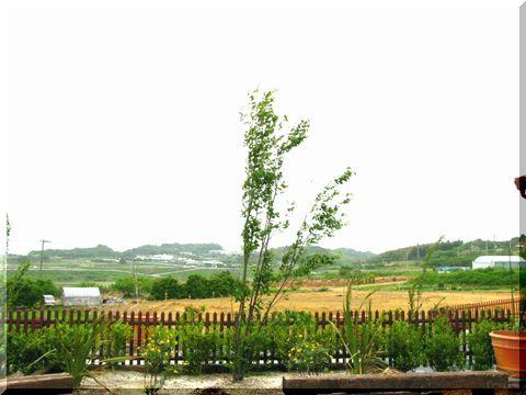 いちごの丘 ←パラダイスだわぁ~ヾ(´∀`*)ノ゛_d0112968_6571032.jpg