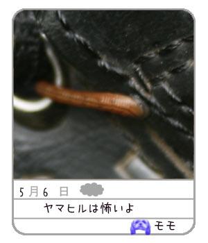 b0024183_22152436.jpg