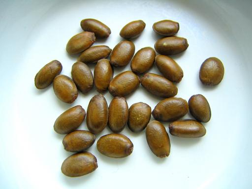 トゲバンレイシの種, soursop seeds