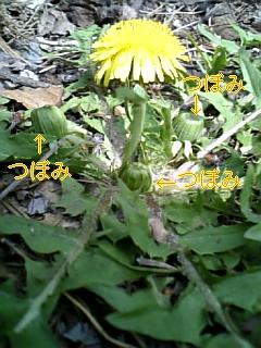 黄色_f0148927_15403246.jpg
