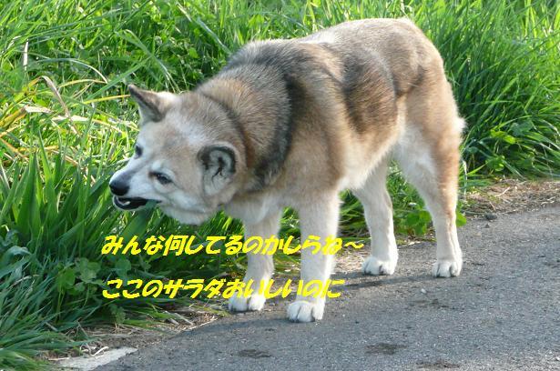 f0114128_1354426.jpg