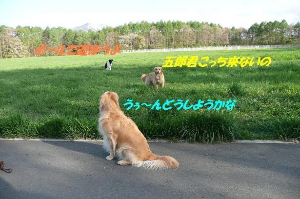 f0114128_13563338.jpg