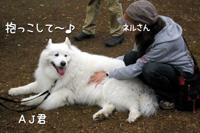 エスキモー ドッグ アメリカン