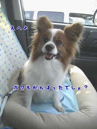 d0013149_10151712.jpg