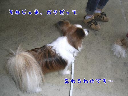 d0013149_8432637.jpg