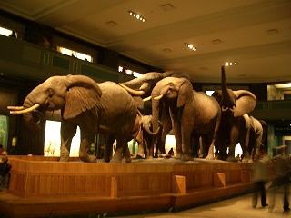 ニューヨークのミュージアム③アメリカ自然史博物館_b0031055_2114335.jpg