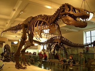 ニューヨークのミュージアム③アメリカ自然史博物館_b0031055_2165881.jpg