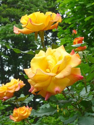 白金 東京都庭園美術館 と Cafe 茶洒 kanetanaka。。。.゚。*・。♡_a0053662_937870.jpg