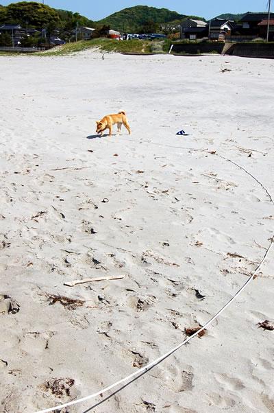 母なる海よ  砂浜よ(後編)_b0123467_10381585.jpg
