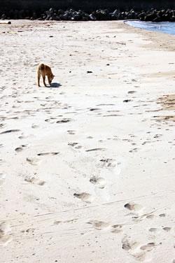 母なる海よ  砂浜よ(後編)_b0123467_10384325.jpg