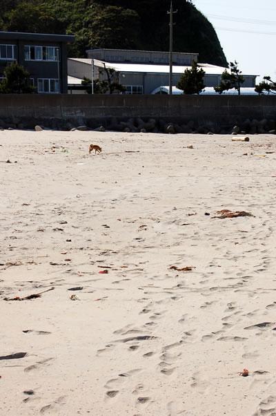 母なる海よ  砂浜よ(後編)_b0123467_1039437.jpg
