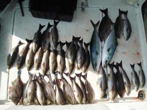 つばきマリーナ釣り大会_a0077071_1452080.jpg