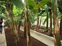 バナナワニ園というから_d0035397_8172584.jpg