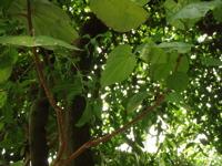 バナナワニ園というから_d0035397_8332696.jpg
