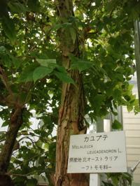 バナナワニ園というから_d0035397_8354665.jpg