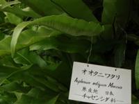 バナナワニ園というから_d0035397_8453257.jpg