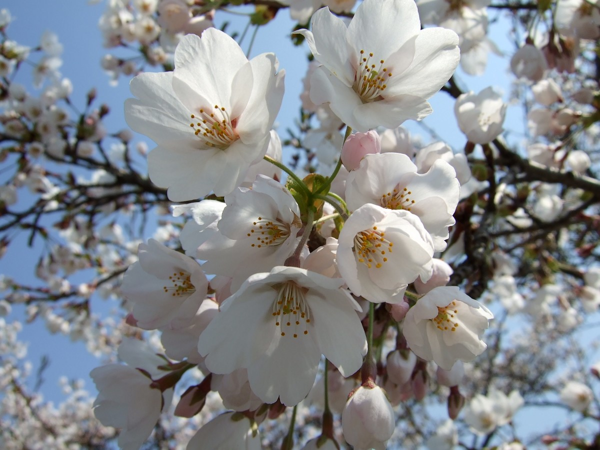 花の小友路_d0001843_23574274.jpg
