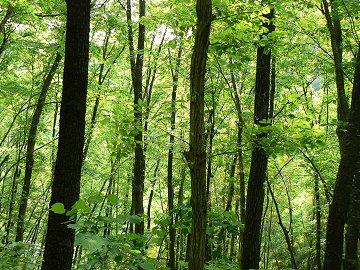 緑溢れる四季の道_f0019247_20582551.jpg