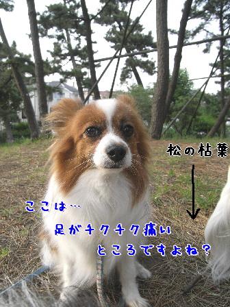 d0013149_7275278.jpg