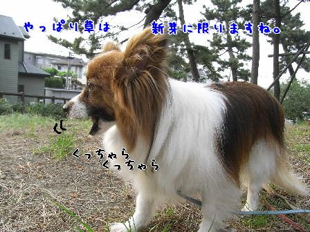 d0013149_83081.jpg