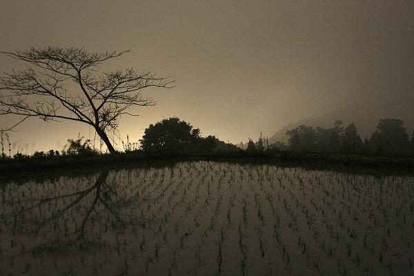 夜中のたんぼ_c0155950_053319.jpg