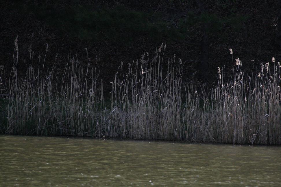 美笹湖の畔(ほとり)-1_a0107574_22291178.jpg