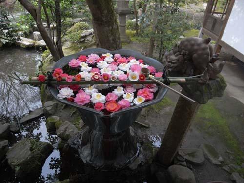 今さら!京都へ行った話 法然院_d0020296_22122674.jpg