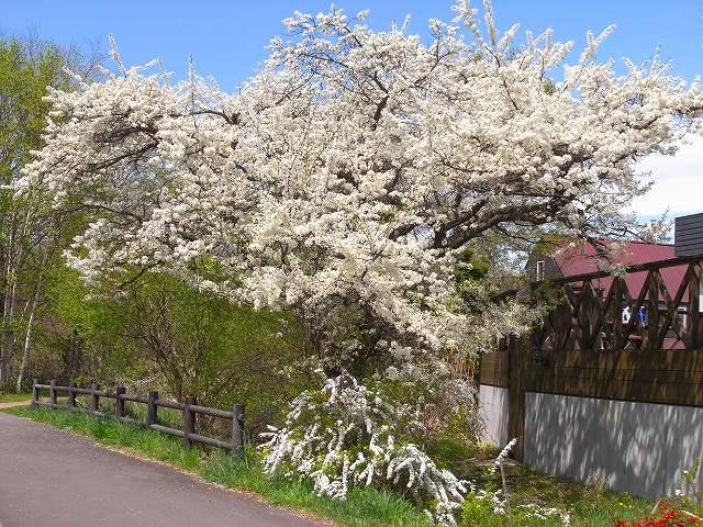 青葉公園周辺の花_f0138096_1310317.jpg
