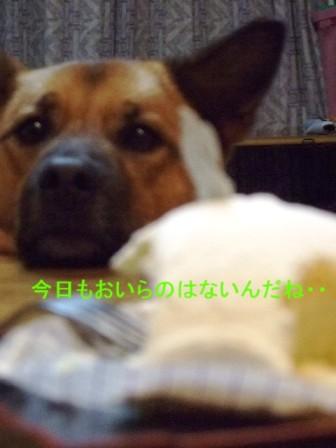 b0087400_236733.jpg