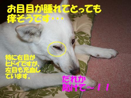 f0121712_15422273.jpg
