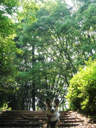 新緑の季節_f0155118_847911.jpg