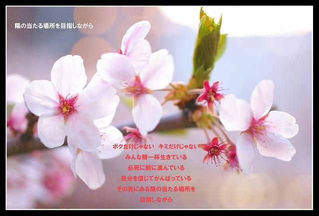 c0112724_12303248.jpg
