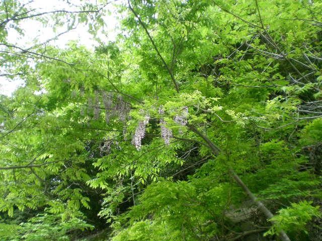 5月10日(土)寒~い日に逆戻り!_f0060461_22205266.jpg